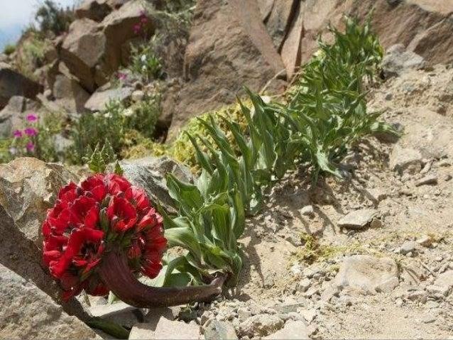 Le chili :atacama le desert des fleurs