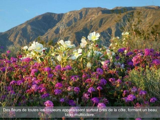 Des fleurs de toutes les couleurs apparaissent surtout près de la côte, formant un beau tapis multicolore.