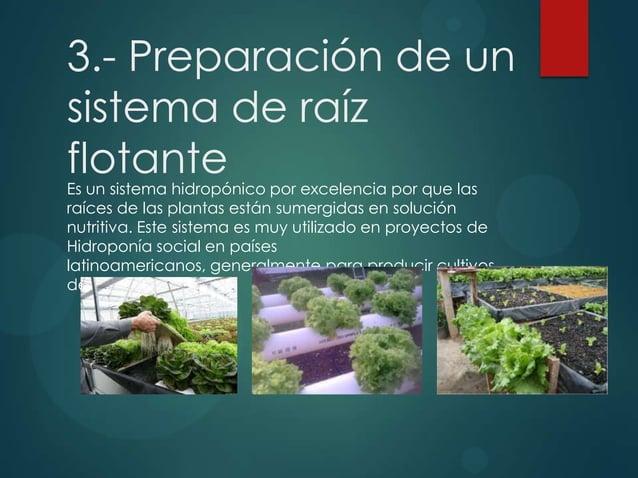 3.- Preparación de un sistema de raíz flotante Es un sistema hidropónico por excelencia por que las raíces de las plantas ...
