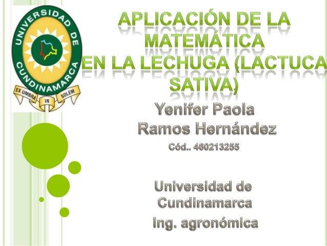   Demostrar, y dar a conocer las aplicaciones de los conceptos matemáticos, en el seguimiento del crecimiento de la lechu...