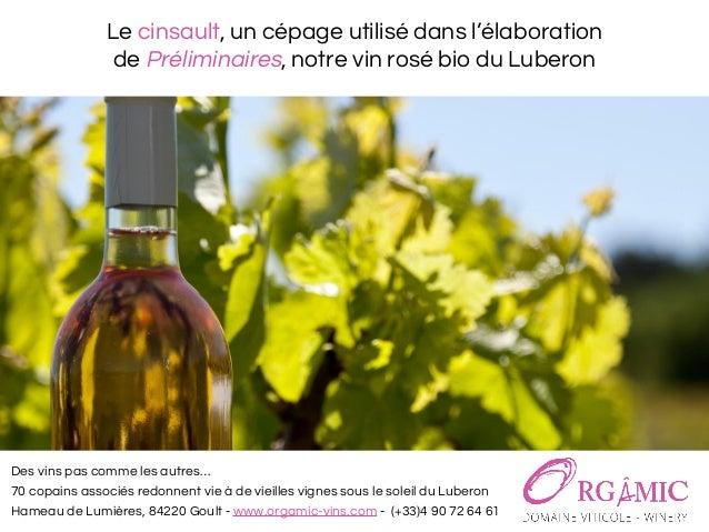 Le cinsault, un cépage utilisé dans l'élaboration de Préliminaires, notre vin rosé bio du Luberon Des vins pas comme les a...