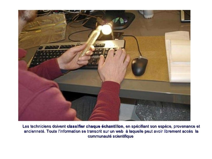 Les techniciens doivent  classifier chaque échantillon , en spécifiant son espèce, provenance et ancienneté. Toute l'infor...