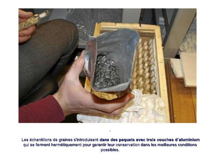 . Les échantillons de graines s'introduisent  dans des paquets avec trois couches d´aluminium  qui se ferment hermétiqueme...