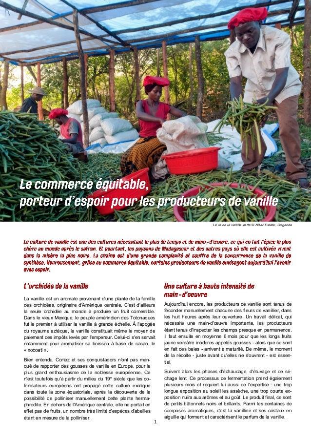 1  Le tri de la vanille verte © Ndali Estate, Ouganda  Aujourd'hui encore, les producteurs de vanille sont tenus de fécond...