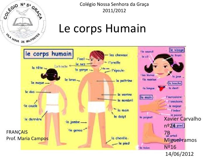 Colégio Nossa Senhora da Graça                                  2011/2012                     Le corps Humain             ...