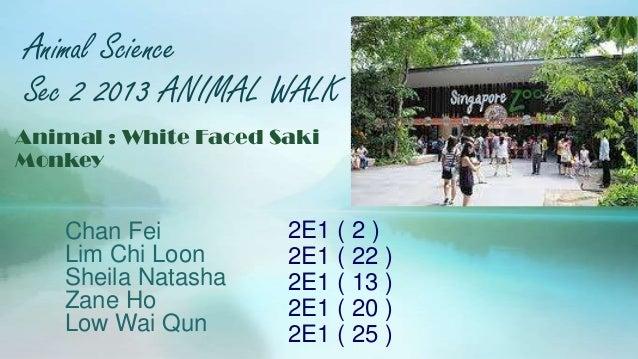 Animal Science Sec 2 2013 ANIMAL WALK Chan Fei Lim Chi Loon Sheila Natasha Zane Ho Low Wai Qun Animal : White Faced Saki M...