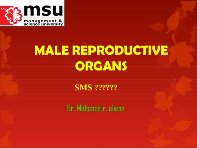 MALE REPRODUCTIVE ORGANS SMS ?????? Dr. Mohanad r. alwan
