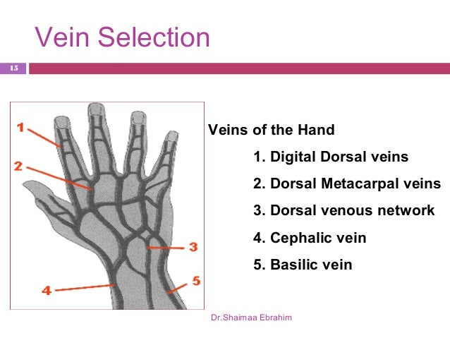 lect 5 cannulation students, Cephalic Vein