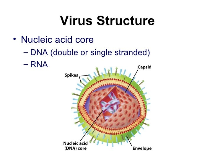 Lect 16 Viruses And Bacteria