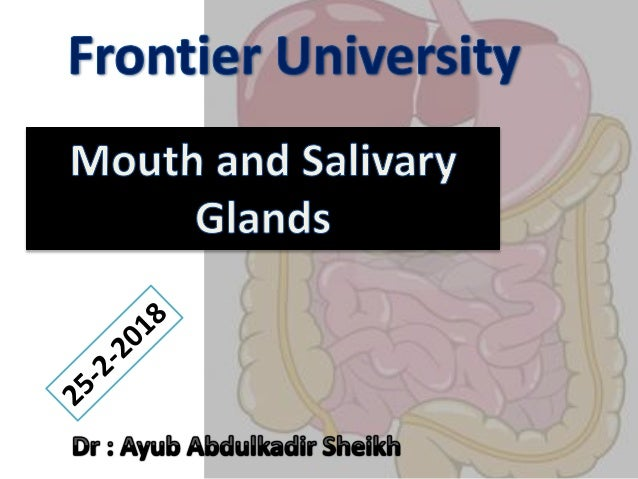 • Mouth or buccal cavity. • It is formed by cheeks, lips and palate. • Inside mouth are the teeth, tongue and salivary gla...