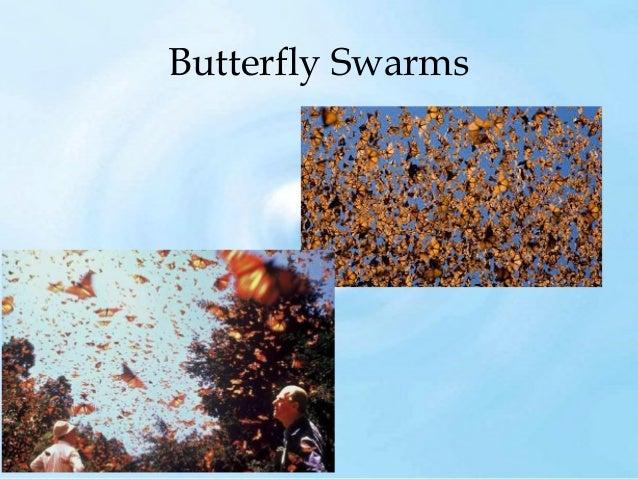 Swarm Intelligence - Bees