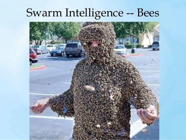 Swarm Intelligence - Ants