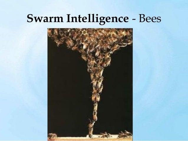 Swarm Intelligence – Termites