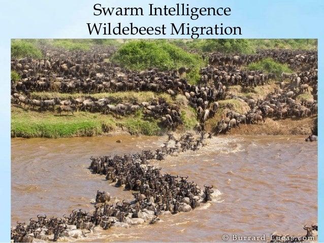 Swarm Intelligence - Jellyfish