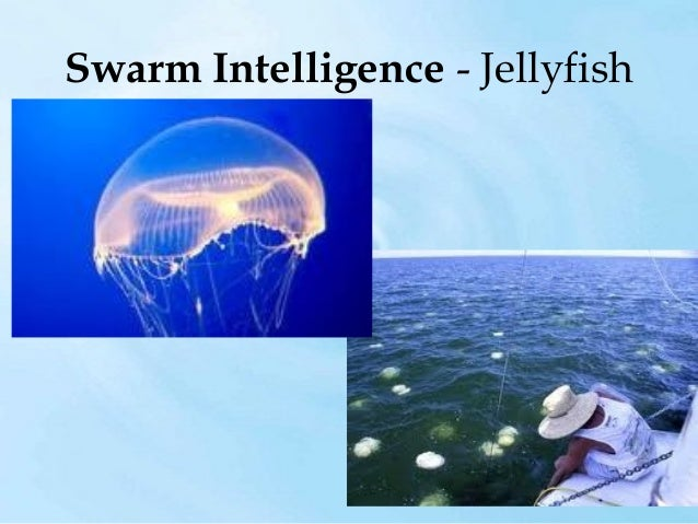 Swarm Intelligence - Slime Mold  Slime Mold Spore  Colony of Spores