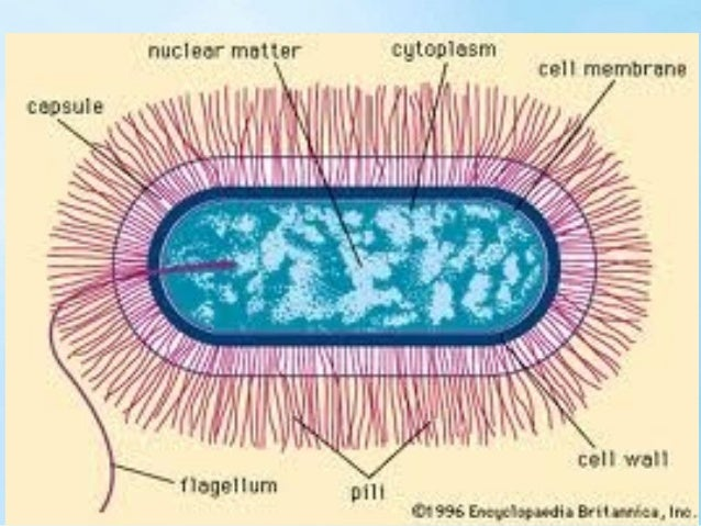 They are you • Microbes and parasites control the way you think.