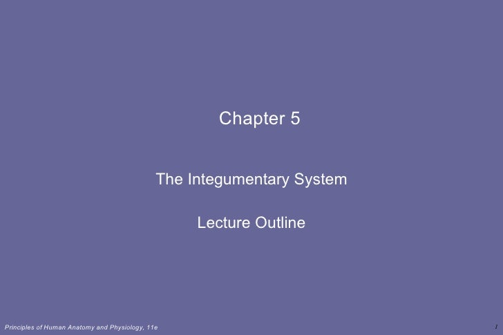 Chapter 5 The Integumentary System Lecture Outline