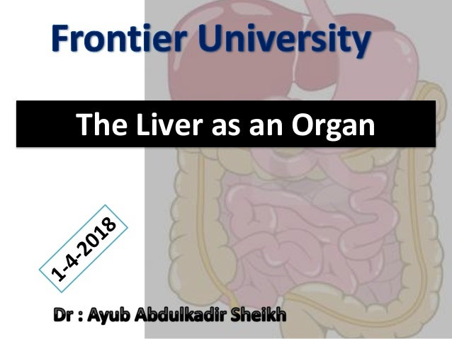 The Liver as an Organ