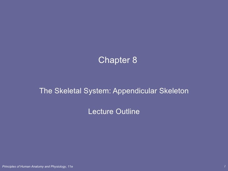 Chapter 8 The Skeletal System: Appendicular Skeleton Lecture Outline