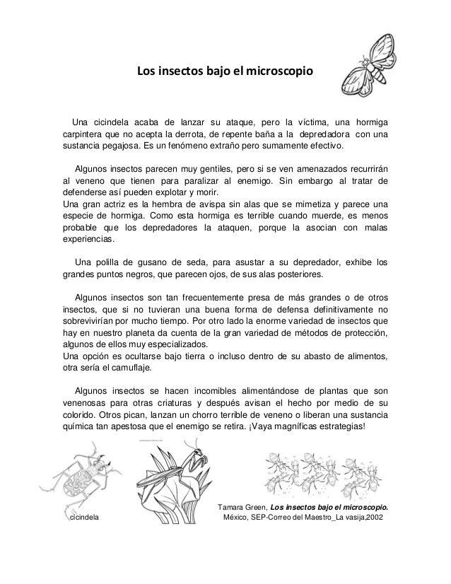 Los insectos bajo el microscopio Una cicindela acaba de lanzar su ataque, pero la víctima, una hormiga carpintera que no a...
