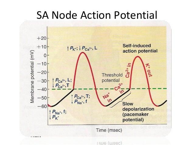 cardiac action potential Cardiac rhythm analysis, 12-lead ecg interpretation, resuscitation.