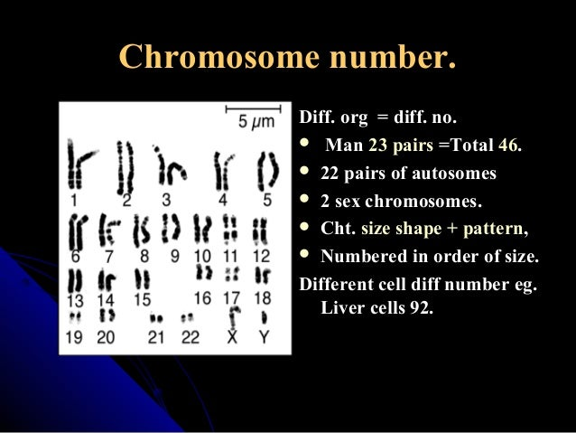 how are autosomes and sex chromosomes different in Montana