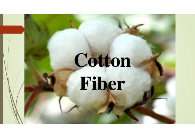 Cotton Fiber Cotton Fiber