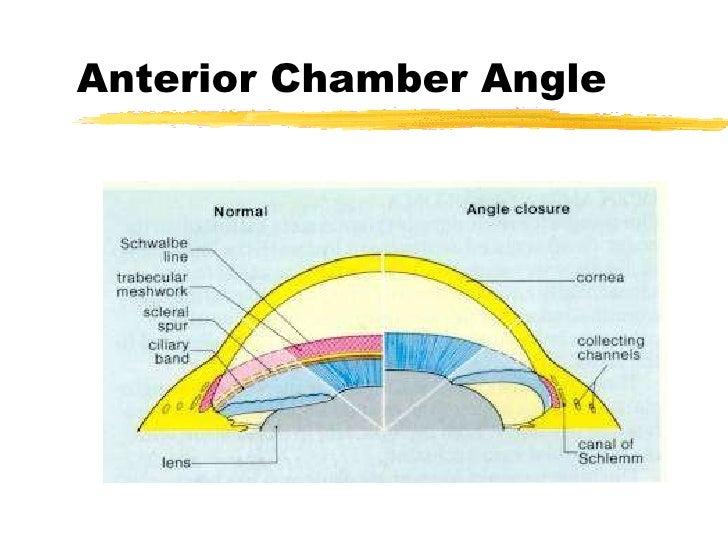 Anterior chamber anatomy