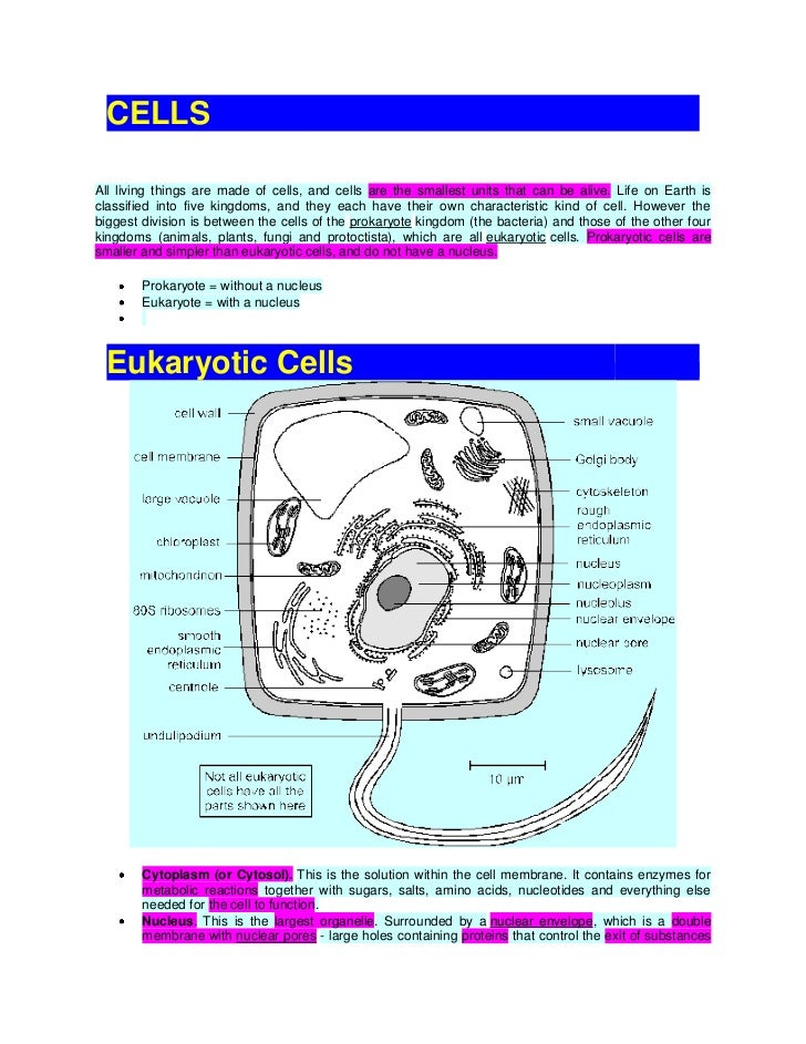 questions on cell membrane transport mechanisms Read online now cell membrane transport mechanisms exercise 4 answers ebook pdf at our library get cell membrane transport mechanisms exercise 4 answers pdf file for free from our online.