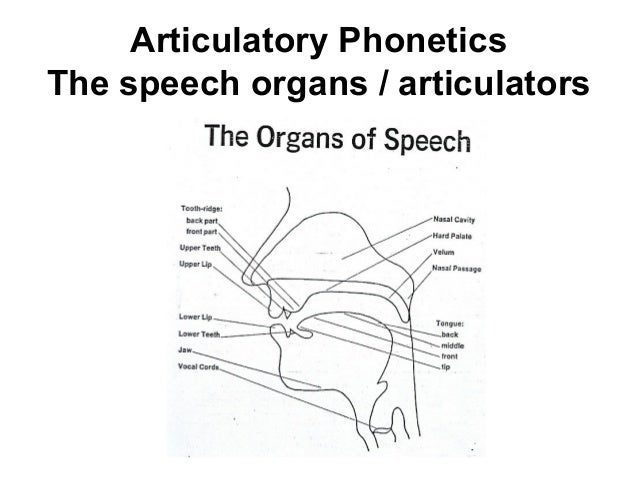 Diagram of the speech organs raja shaukat diagram of speech organs diagram of the speech organs diagram of speech organs pdf choice image how to guide ccuart Images