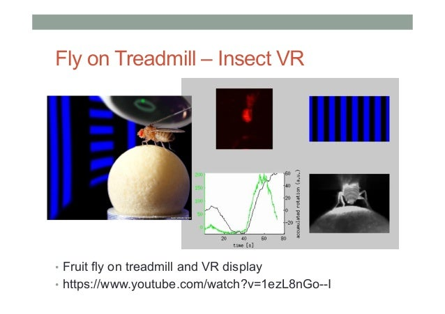 Fly on Treadmill – Insect VR • Fruit fly on treadmill and VR display • https://www.youtube.com/watch?v=1ezL8nGo--I