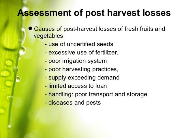 post harvest management of fruits Post-harvest disease control in mango is currently achieved through a combination of pre- and post-harvest fungicide application, orchard hygiene and post-harvest temperature management inoculum of post-harvest diseases occurs on leaves, stems and flowers, so field control is important to reduce post-harvest losses.