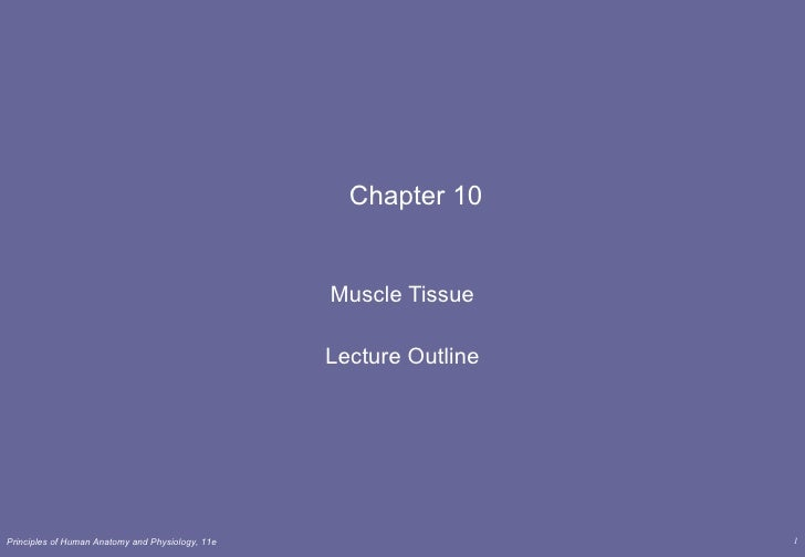 Chapter 10 Muscle Tissue Lecture Outline