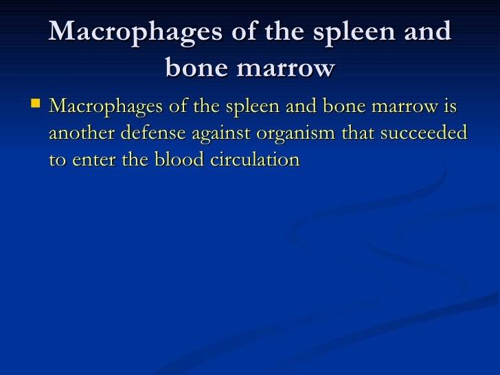 Macrophages of the spleen and bone marrow <ul><li>Macrophages of the spleen and bone marrow is another defense against org...