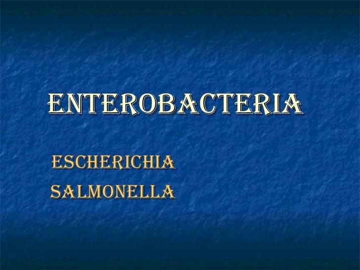 Enterobacteria   Escherichia  Salmonella