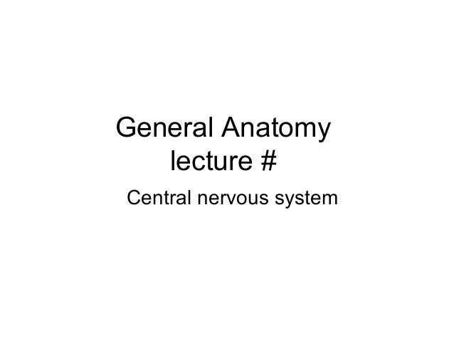 General Anatomy lecture # Central nervous system