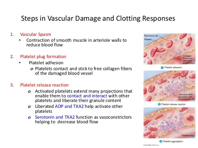 platelet plug formation steps Haemostasis consists of a 3-step procedure primary haemostasis : 1) local vascular contraction (to reduce blood flow to the injury site), 2) platelet plug formation.