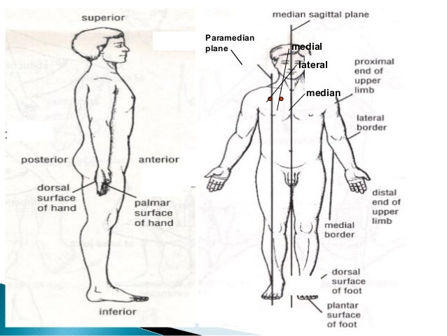 Lecture 1 Introduction To Anatomy Nursing Level 1