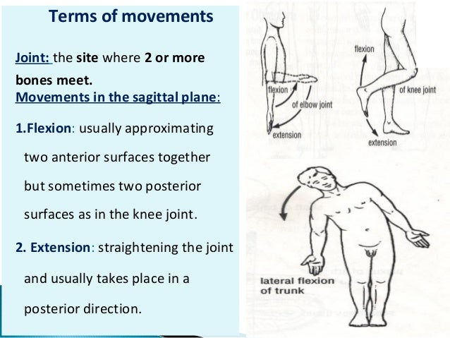 Body movements anatomy