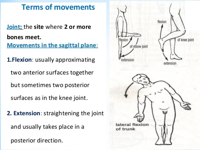 Flexion definition anatomy
