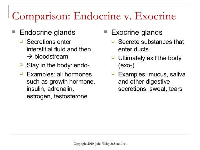 testosterone glands