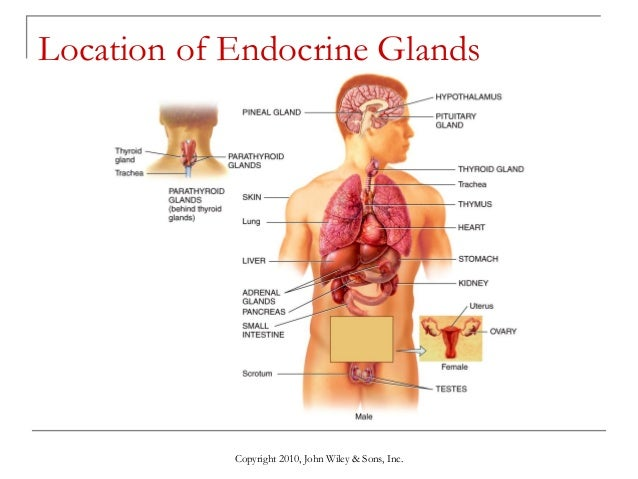 Lecture 1 The Endocrine System