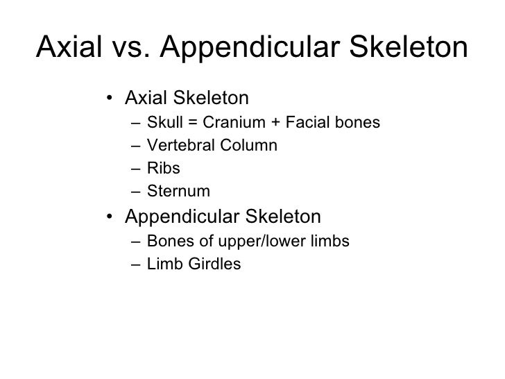 Lecture 1 thoracic wall   Slide 2