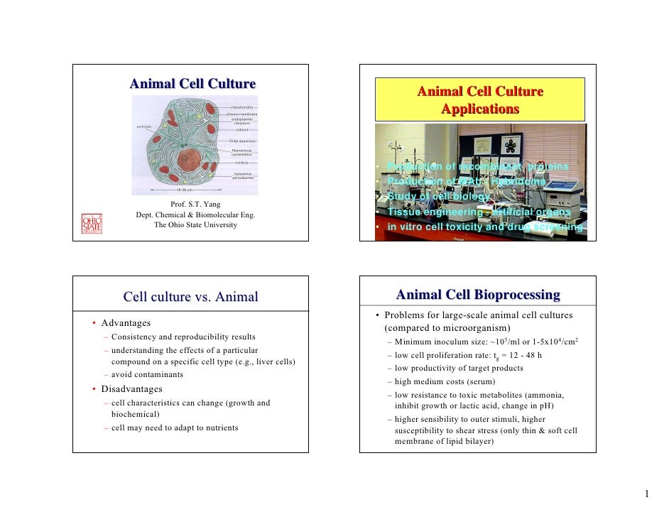 Animal Cell Culture                                           Animal Cell Culture                                         ...