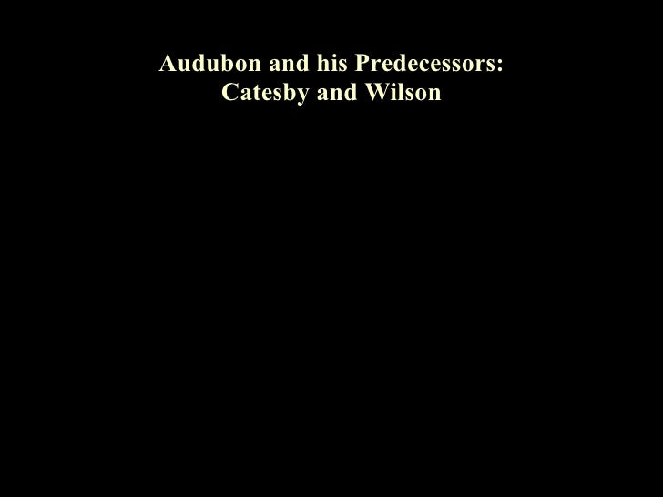 Audubon and his Predecessors:     Catesby and Wilson