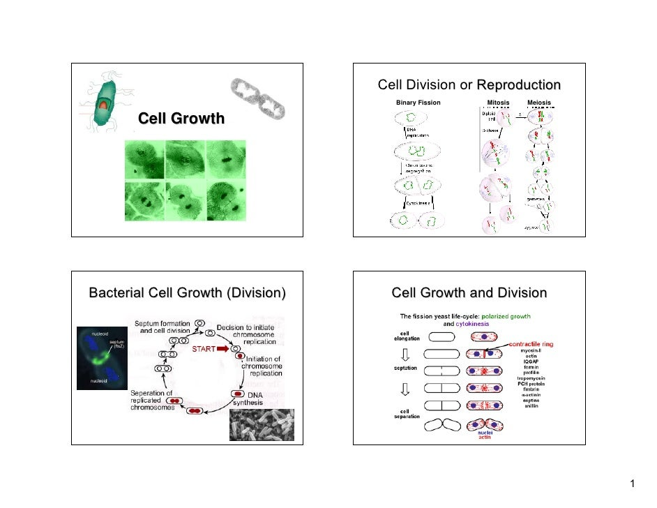 Lecture 2 cell growth