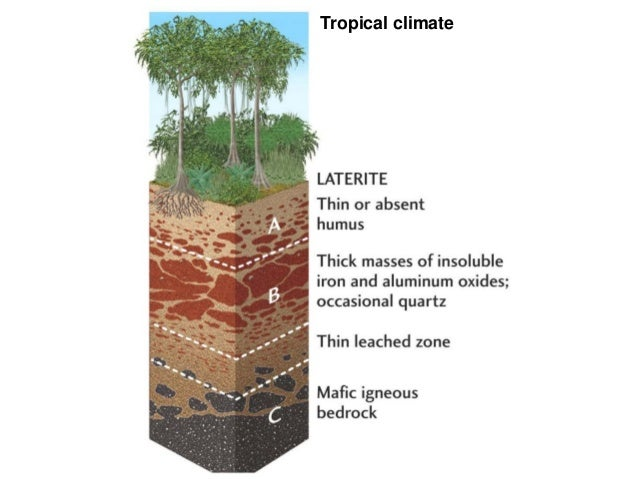 Lecture 2 edaphic factors for Soil profile for kids