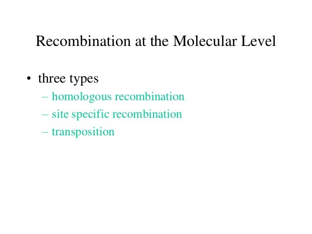 Recombination at the Molecular Level • three types – homologous recombination – site specific recombination – transpositio...