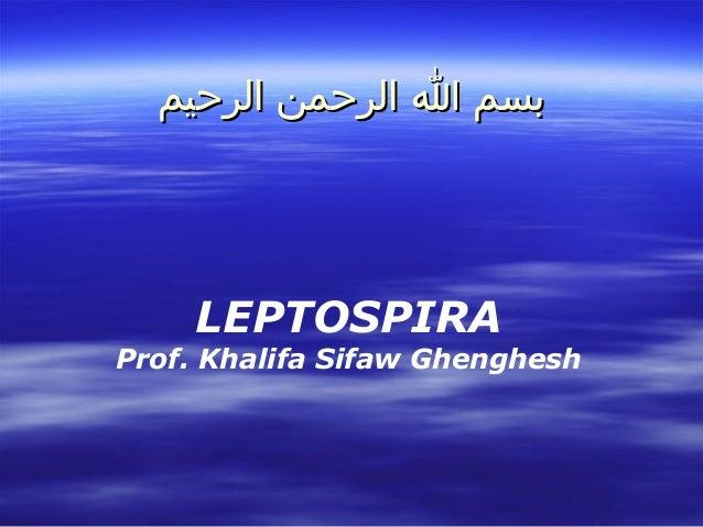 بسم ا الرحمن الرحيم  LEPTOSPIRA  Prof. Khalifa Sifaw Ghenghesh