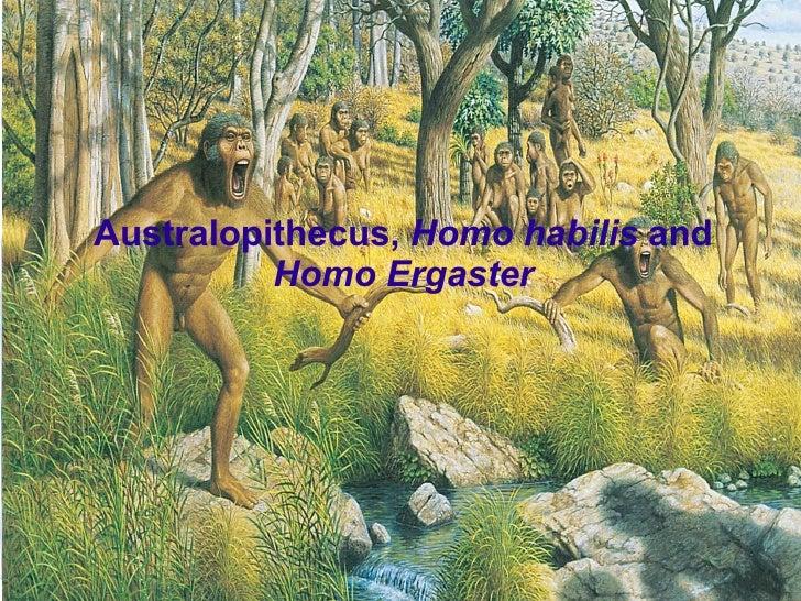 Australopithecus, Homo habilis and           Homo Ergaster